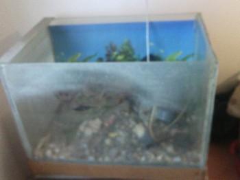 отдам аквариум - IMG_20150705_194945.jpg