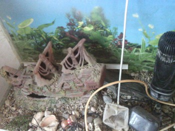 отдам аквариум - IMG_20150705_194851.jpg